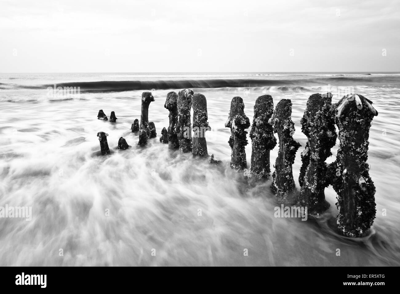 Groynes in the sea in the evening, North sea, Kampen, Sylt, Schleswig-Holstein, Germany - Stock Image