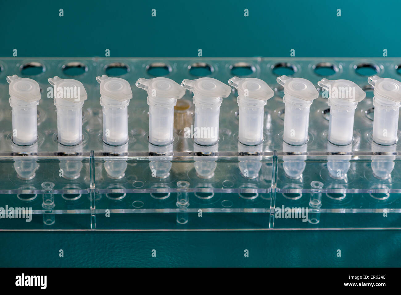 White Spin Filter sorted in a transparent rack, Chemnitz, Saxony, Germany - Stock Image