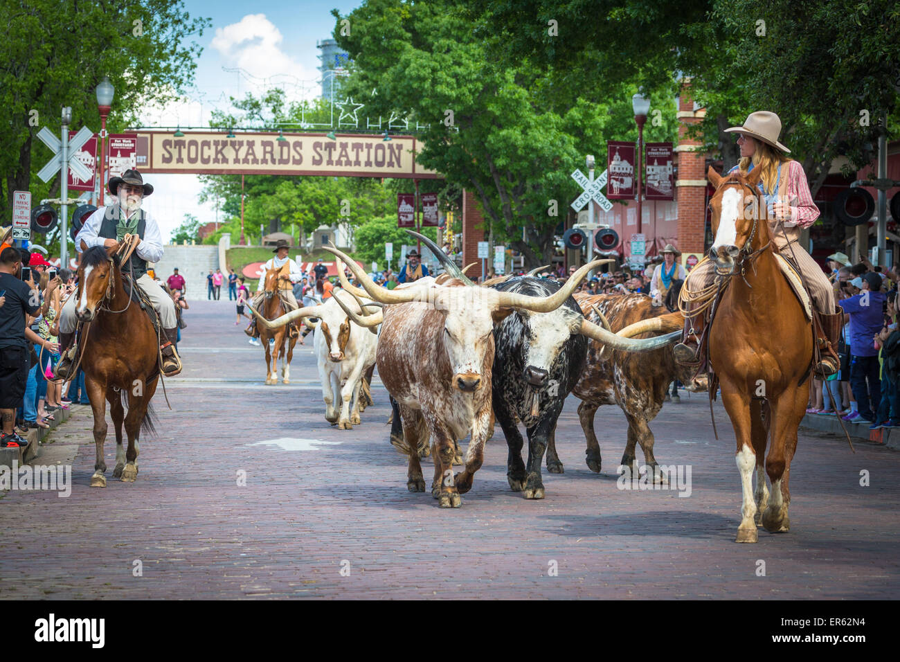 Cattle Drive Texas Longhorn Cattle With Cowboys And Cowgirl Stock Photo Alamy