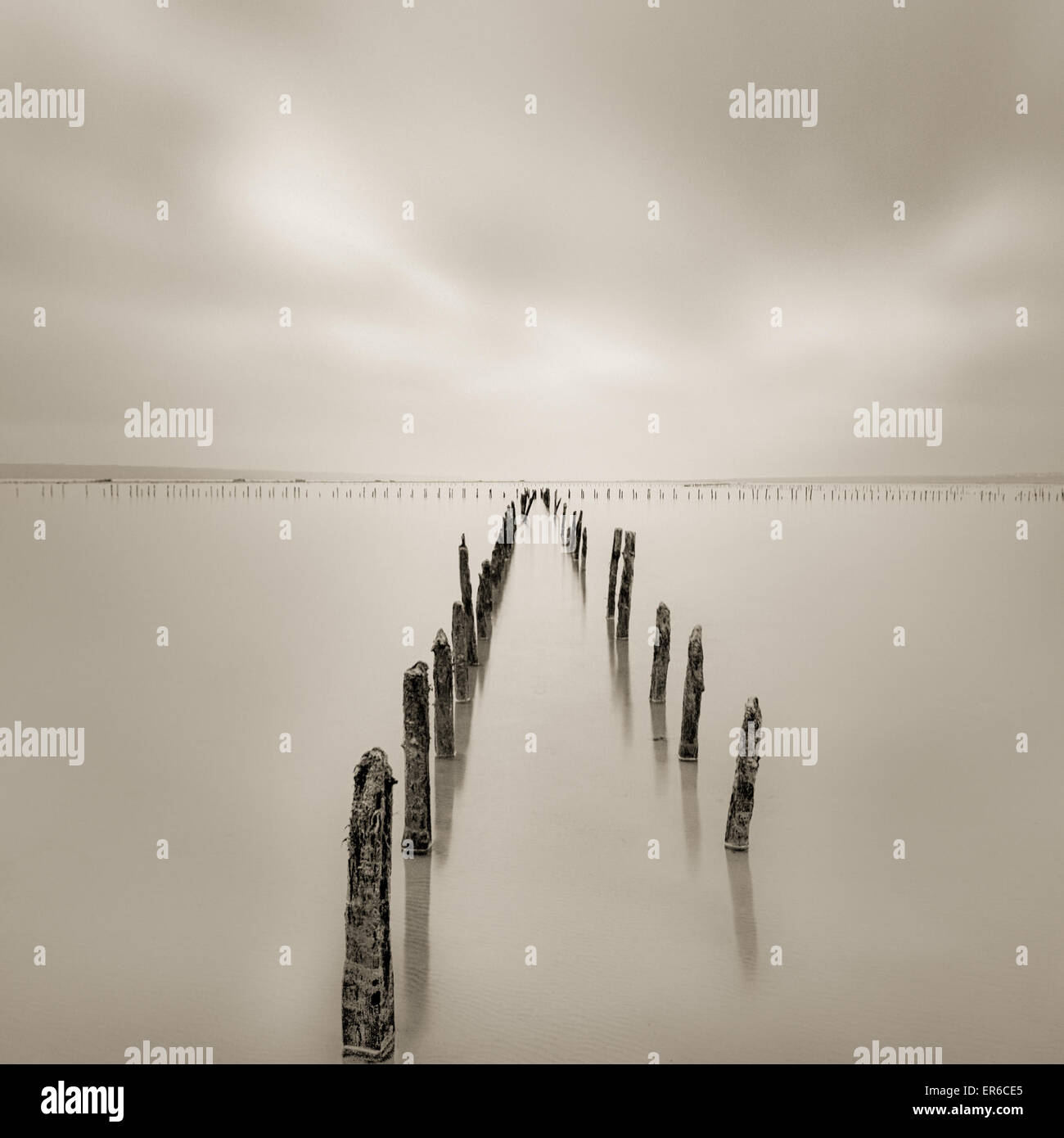 Poles in the water - calmness and silence concept - Stock Image