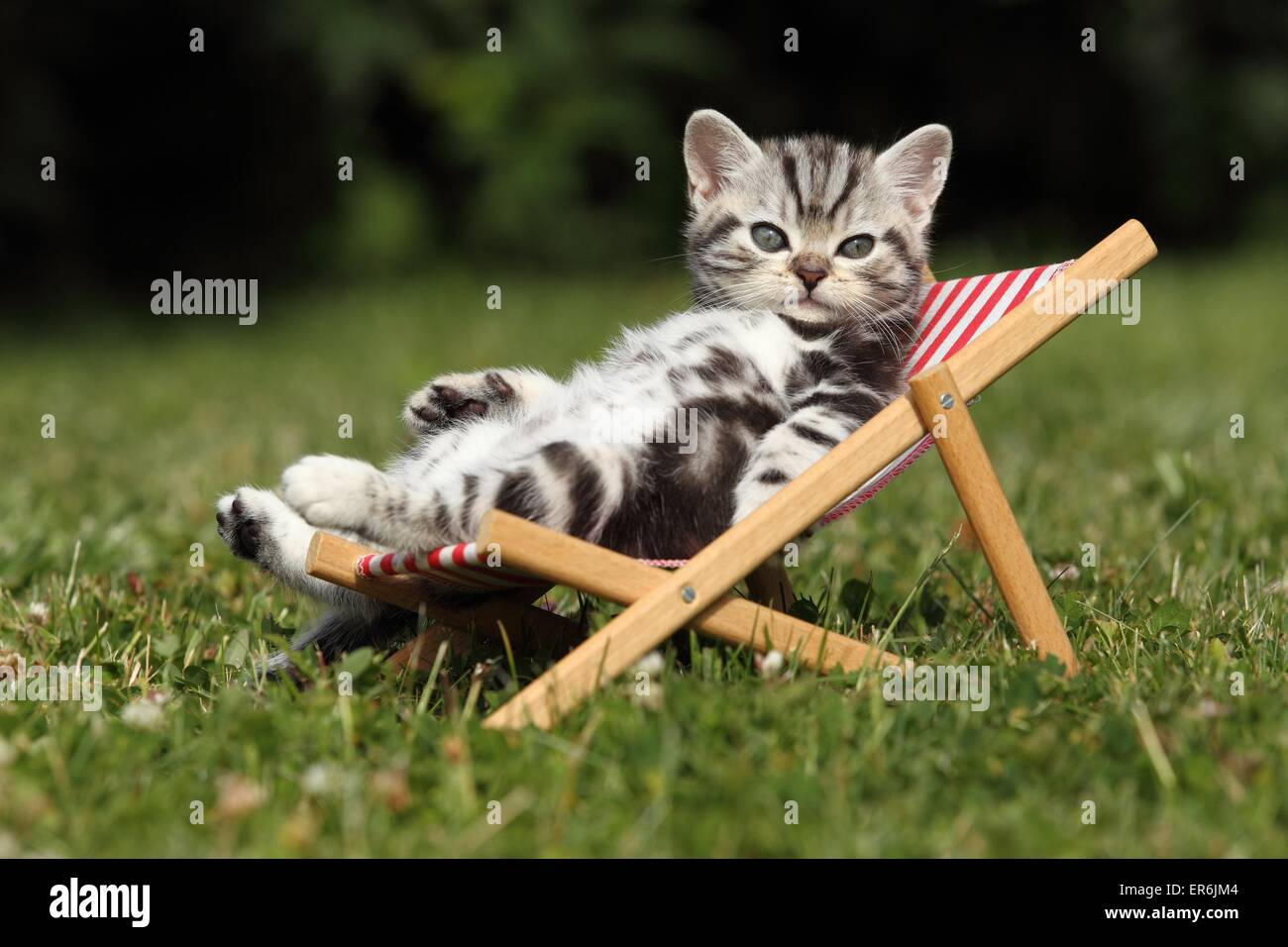 Sun Lounger And Funny Stock Photos Amp Sun Lounger And Funny