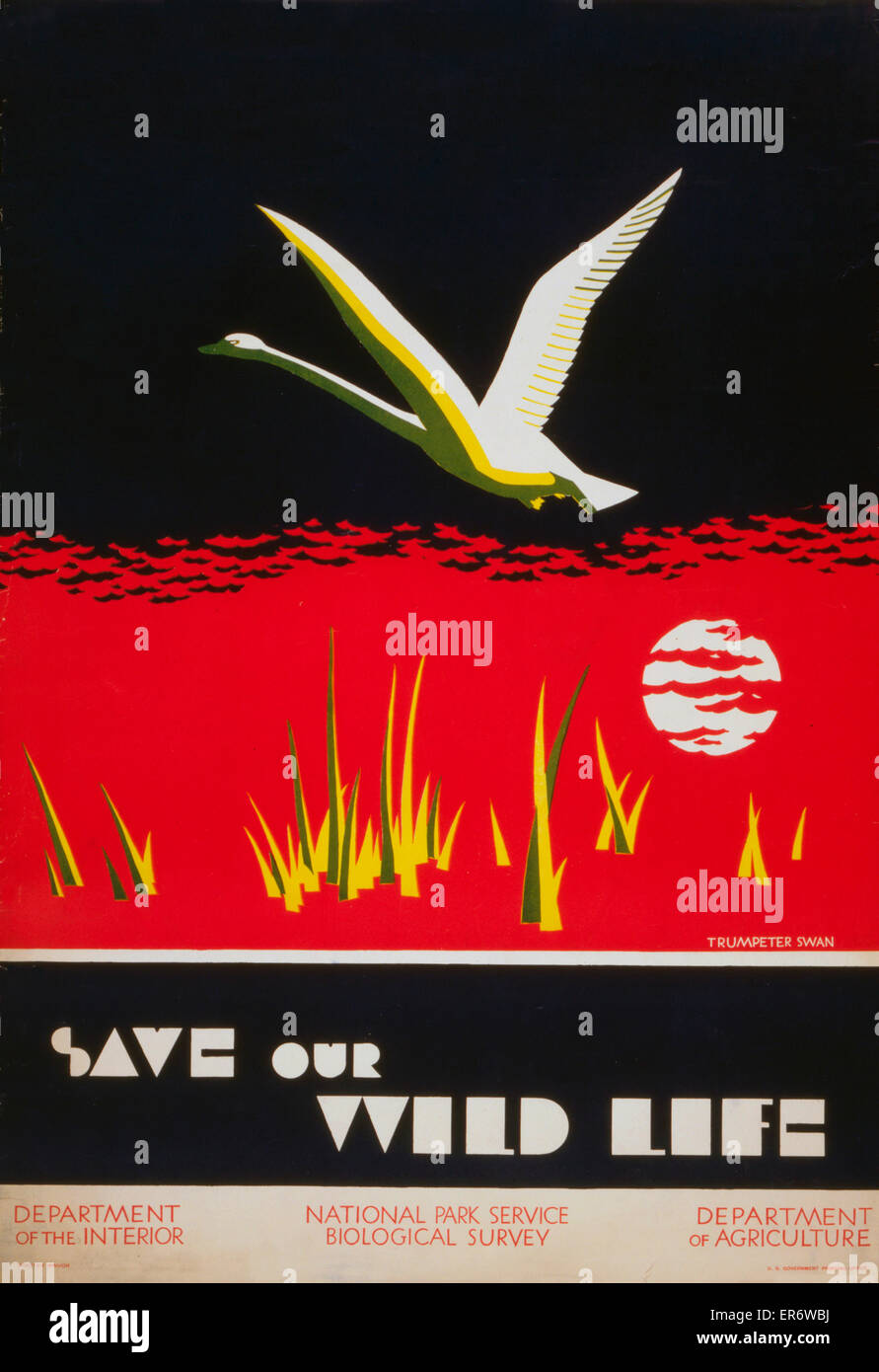 Save our wild life. Poster showing trumpeter swan. Date between 1930 and 1940. - Stock Image