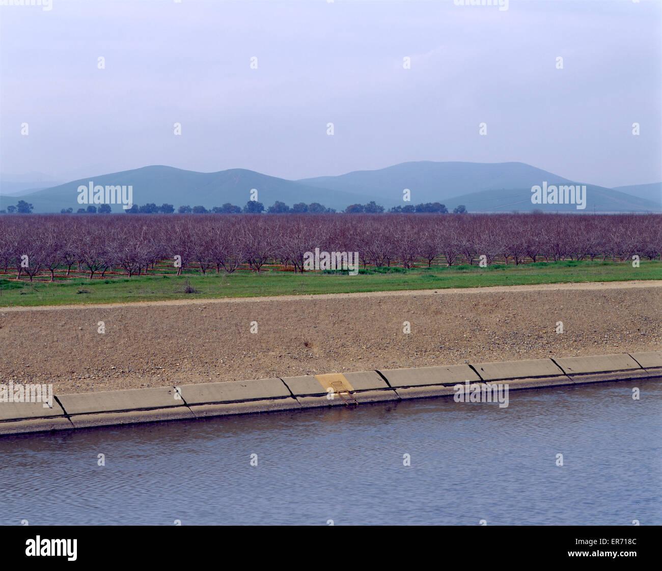 Fruit orchard and California Aqueduct - Stock Image