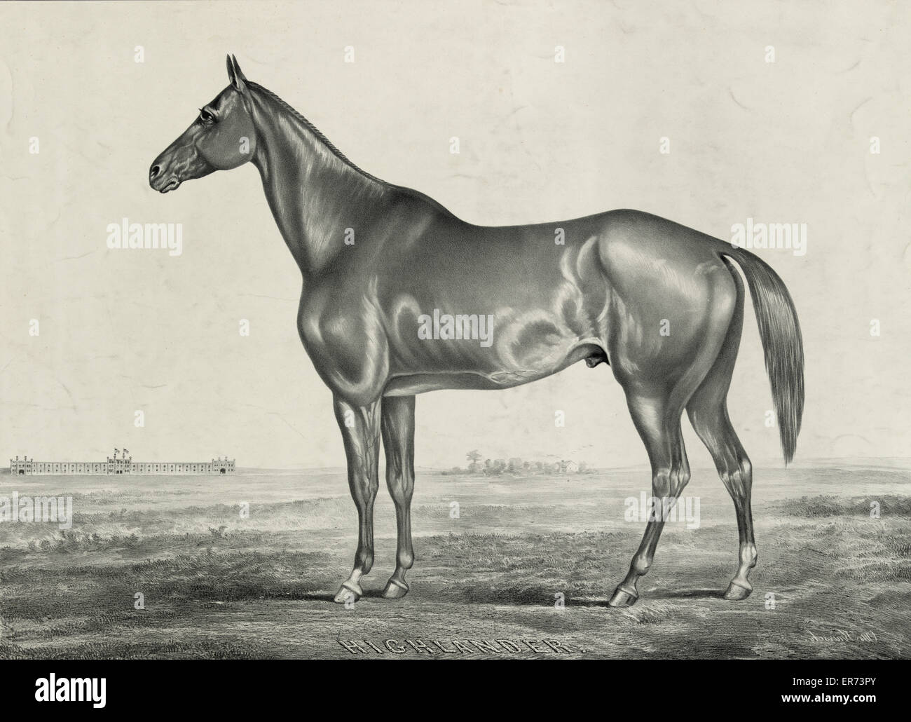 Highlander, by Glencoe, dam Castanet, by Monarch. Date c1854. - Stock Image