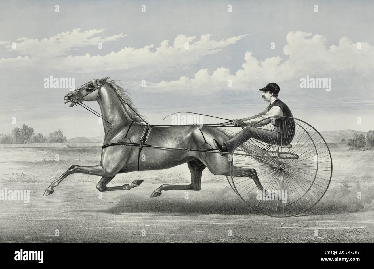 Hopeful: grey gelding by Godfrey's Patchen, dam unknown. Date c1876. - Stock Image