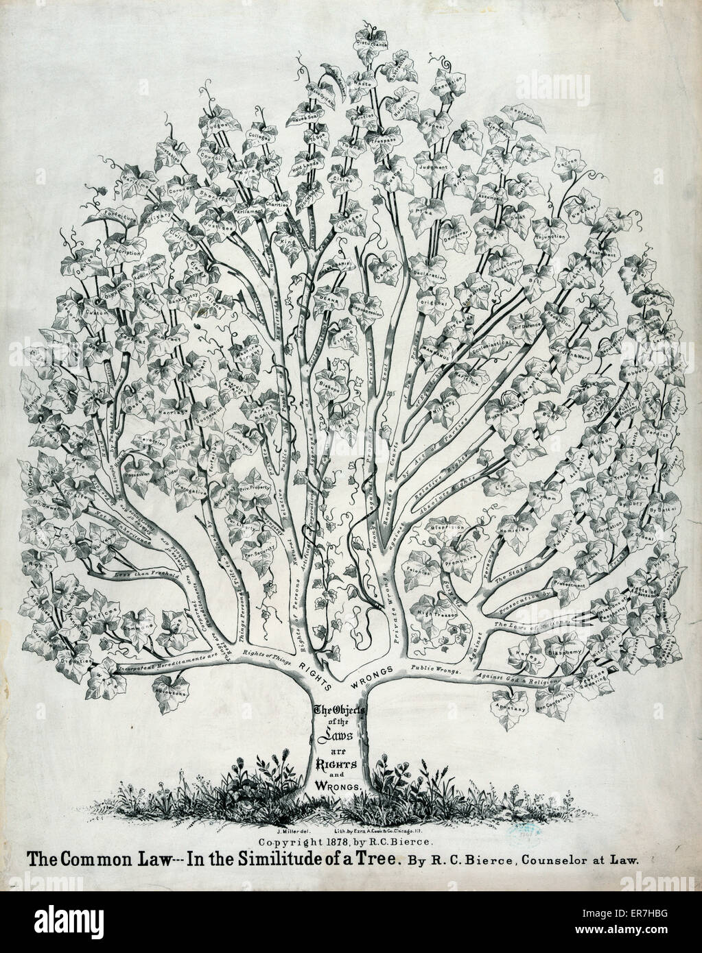 The common law in the similitude of a tree. Date c1878. - Stock Image