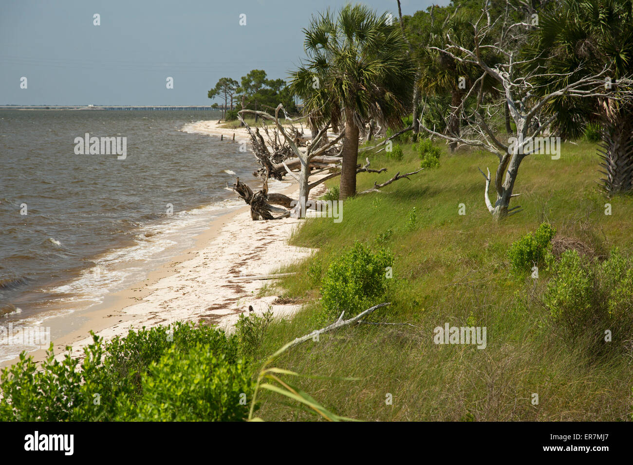 Eastpoint, Florida - The beach at Apalachicola National Estuarine Research Reserve. - Stock Image