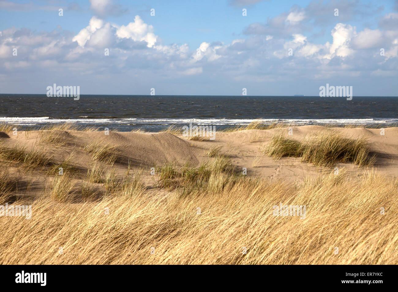 dune grass  and the main beach, East Frisian Island Spiekeroog, Lower Saxony, Germany - Stock Image