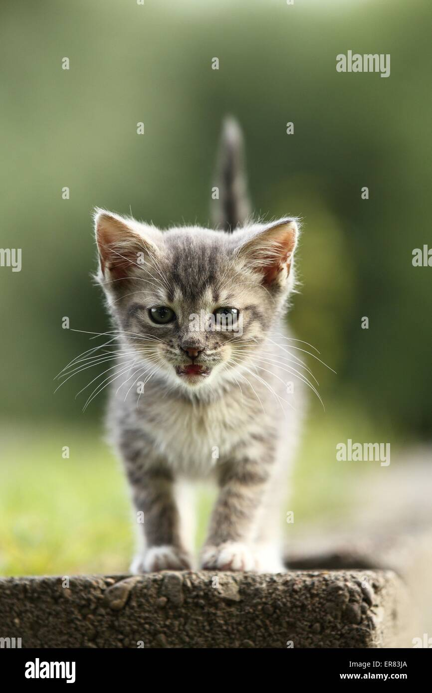 kitten - Stock Image