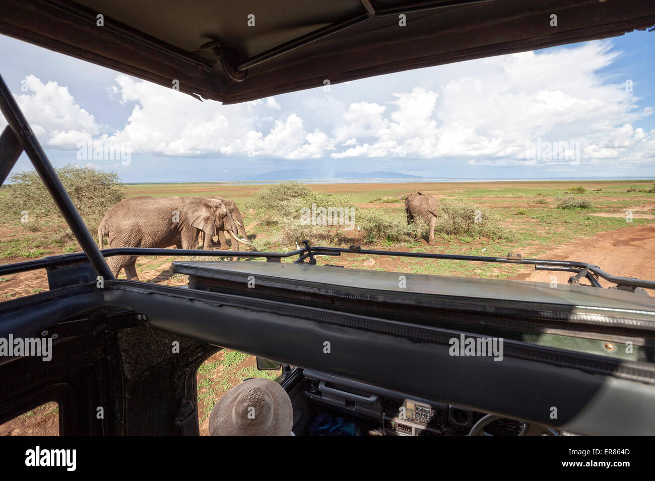 Safari at Lake Manyara National Park, Tanzania - Stock Image