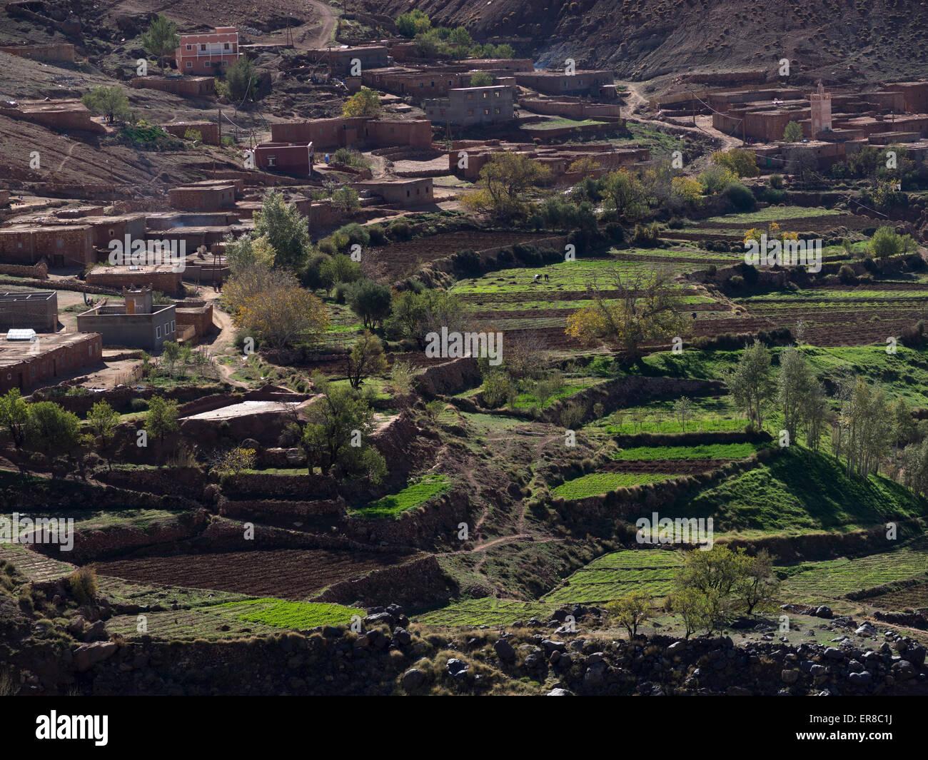 Terraced field in Morocco. - Stock Image