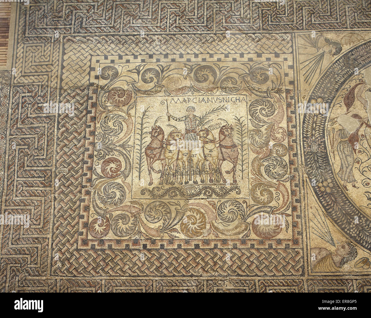 The Aurigas mosaic. 4th century. The victoriuos charioteer Marcianus with his chariot. He carries a palm of triumph - Stock Image