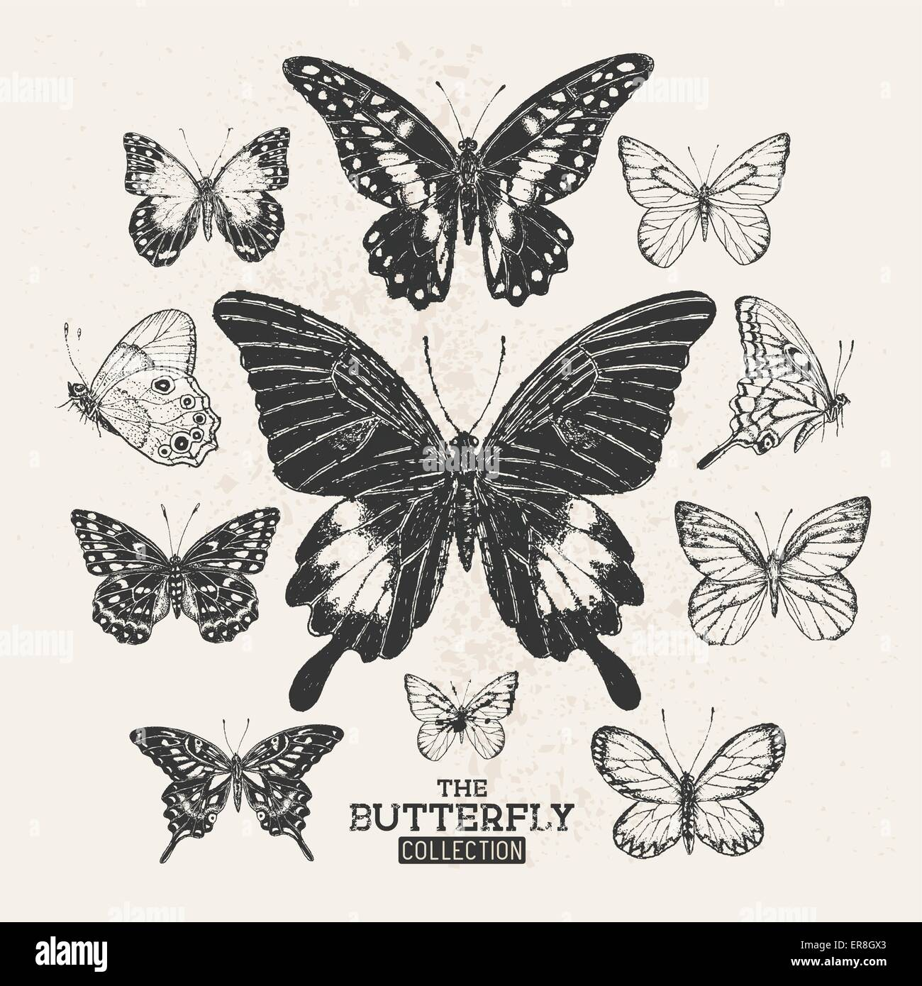 The Butterfly Collection. A collection of hand drawn butterflies, vintage set. Vector illustration. - Stock Image