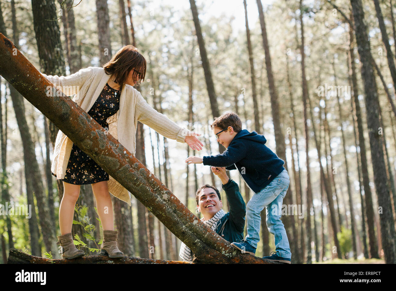 Happy parents assisting son in climbing tree at forest - Stock Image