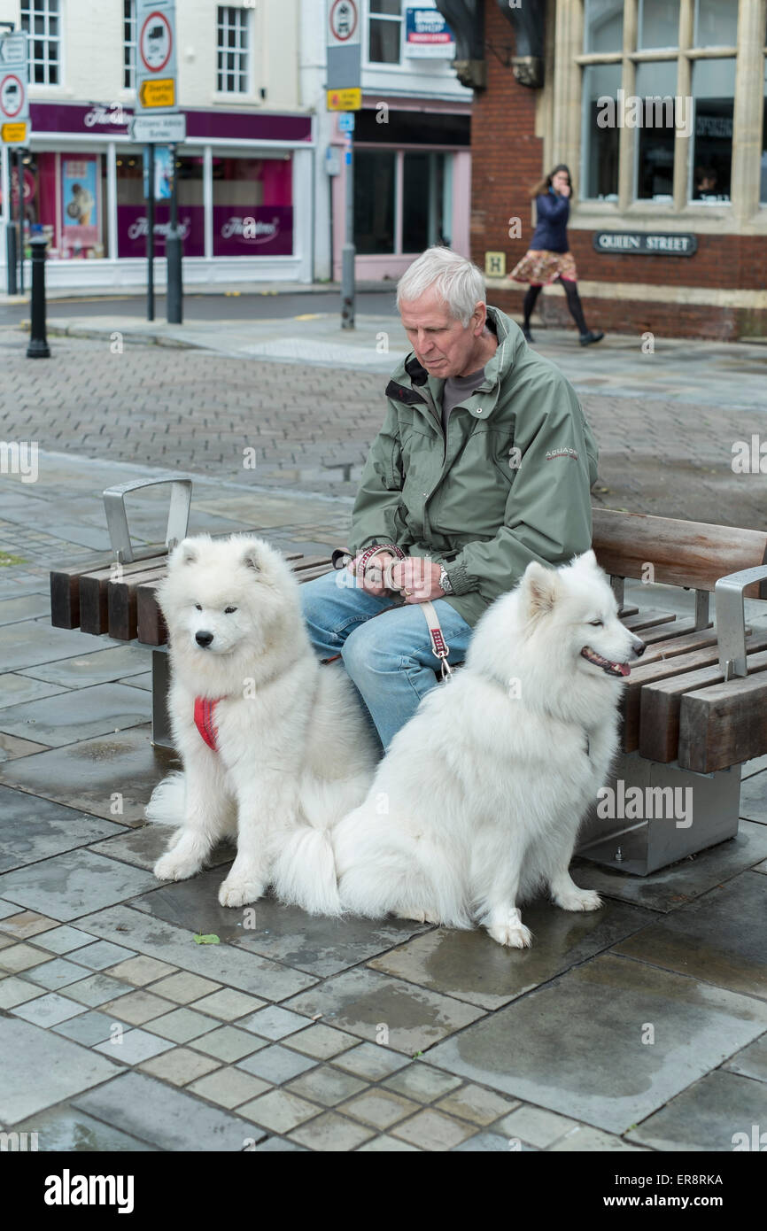 Man having a nap on a bench with two dogs in Market Square Salisbury Wiltshire - Stock Image