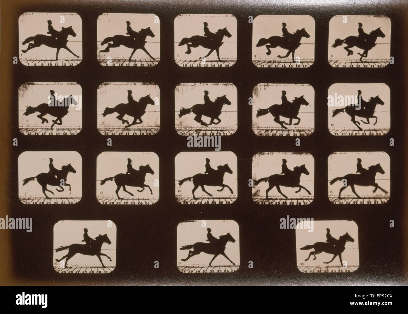 Horses. Running. Photograph shows eighteen consecutive images of a man riding a horse named Florence A Date c1881. - Stock Image