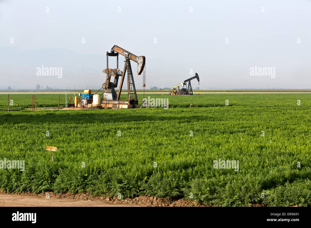 Donkey pumps operating in carrot field. - Stock Image
