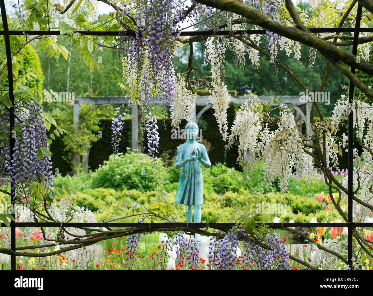 Girl statue called the 'lamp of wisdom'. Ornamental garden statue and Wisteria archway in the formal garden - Stock Image