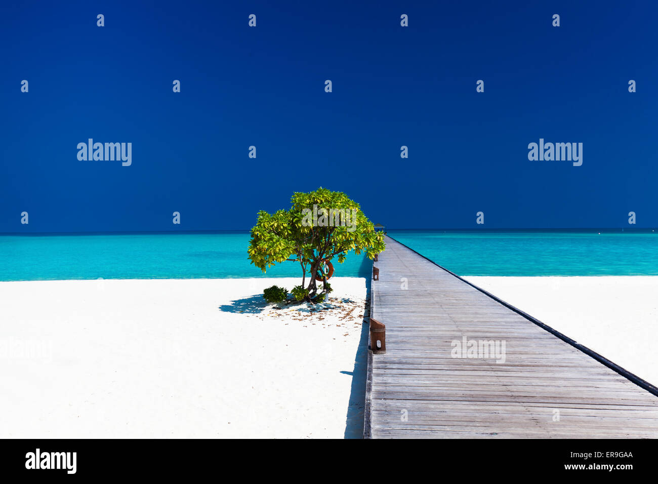 Beautiful beach with wodden jetty and single small tree in Maldives - Stock Image
