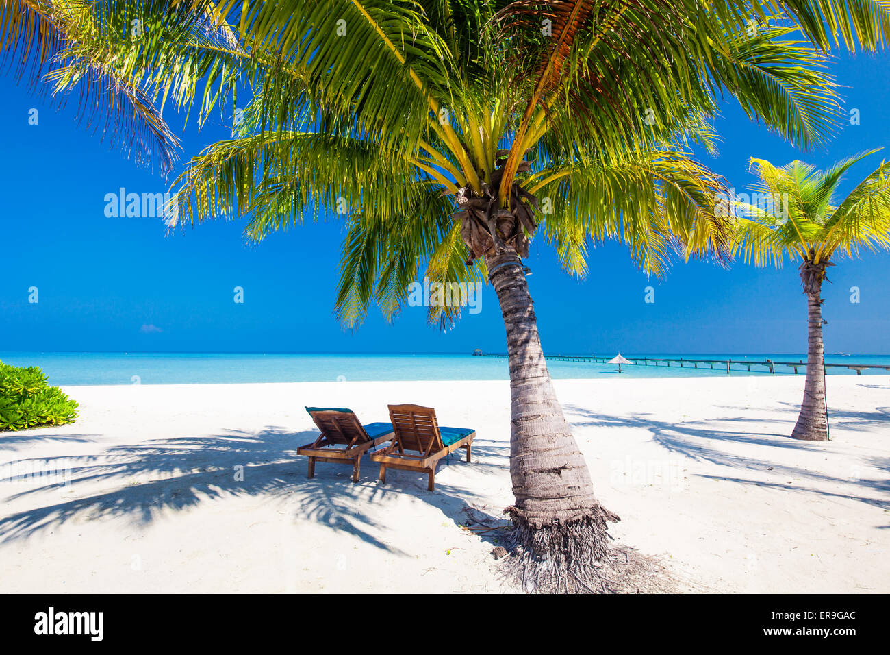 Deck chairs under umrellas and palm trees on a tropical beach - Stock Image
