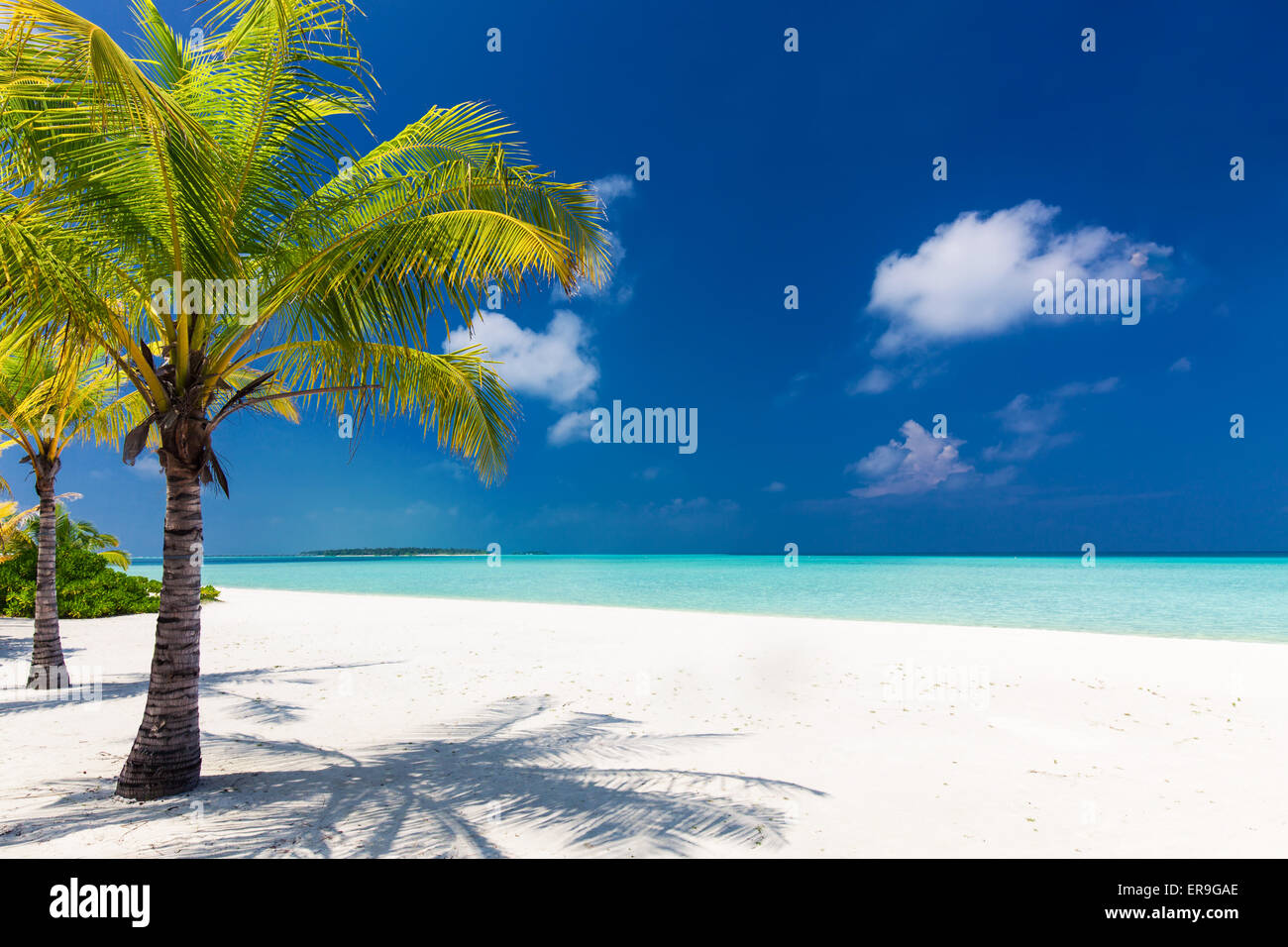 Two palm trees overlooking blue lagoon and white beach, Maldives - Stock Image