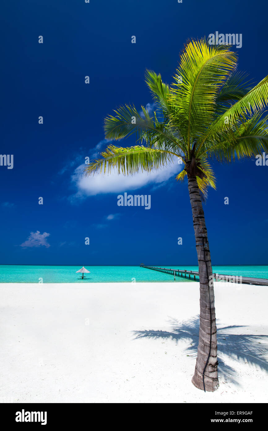 Palm tree in tropical perfect beach at Maldives with jetty in distance - Stock Image