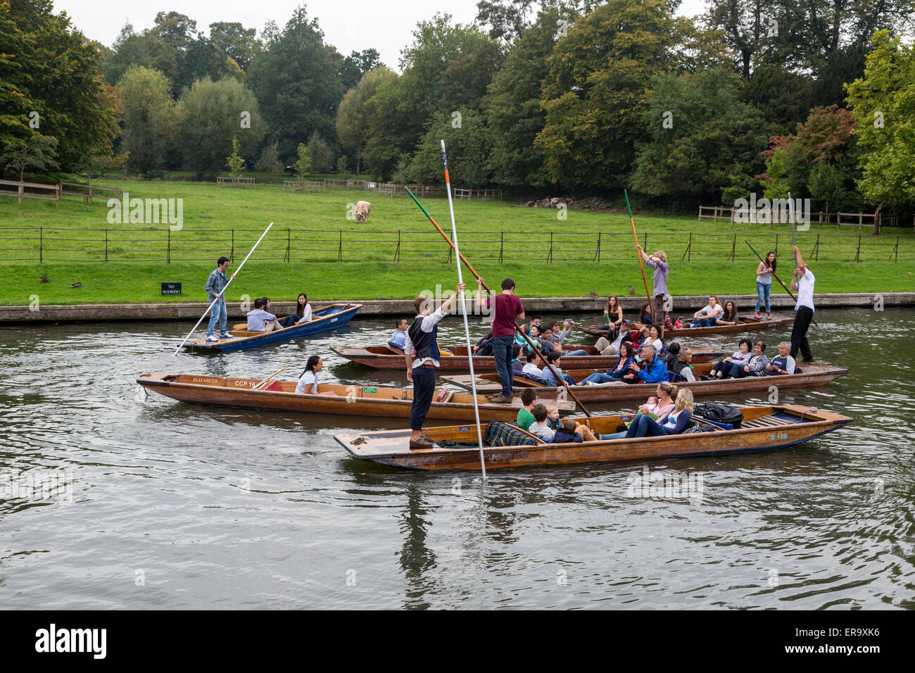 UK, England, Cambridge.  Punting on the River Cam on a Busy Friday Morning. - Stock Image