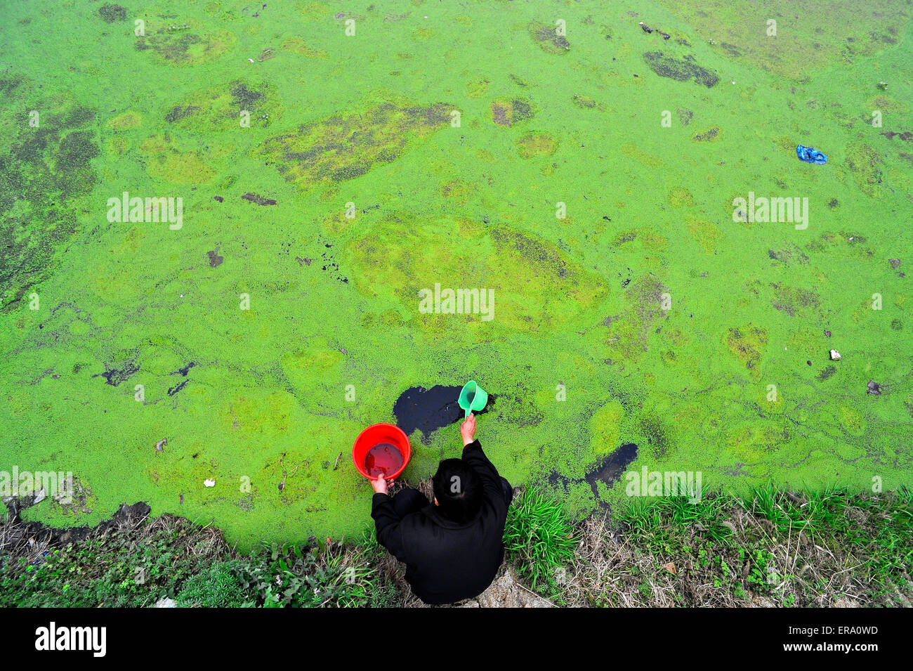A man takes water in a pond in Xiangyang, Hubei province, China on 22 March 2015. - Stock Image