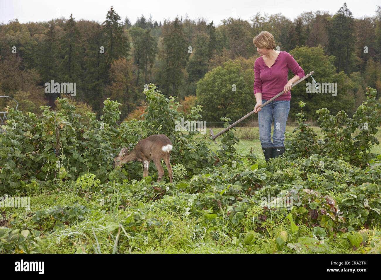 woman and young roe deer - Stock Image