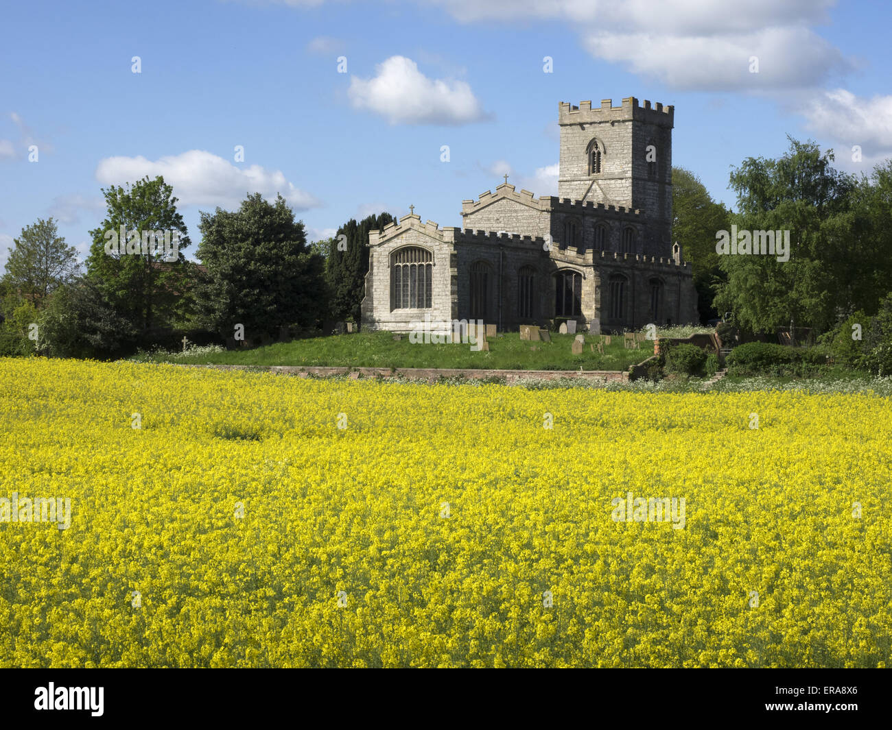 Saint Wilfrid's church in North Muskham Nottinghamshire, as seen from the banks of the river Trent. - Stock Image