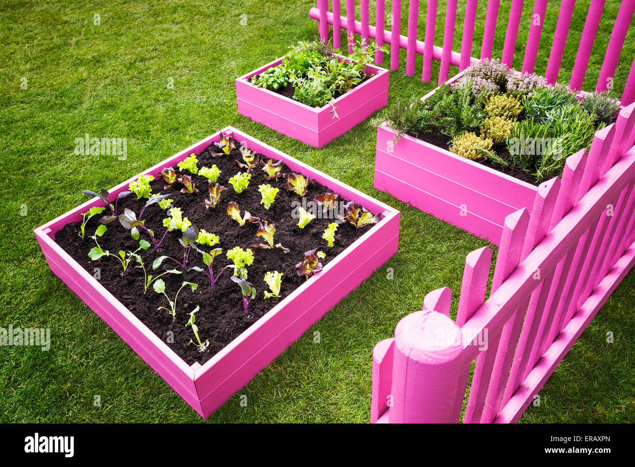 Small Herb Garden Pink Raised Beds With Herbs And Vegetables