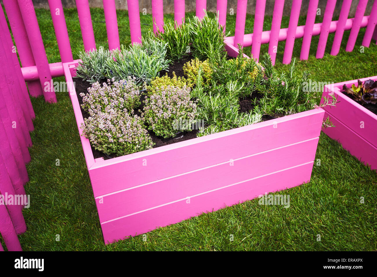 Herb garden. Pink raised beds with herbs and vegetables ... on raised garden planters, raised garden boxes, planter box designs, small backyard designs, raised garden trellis designs, raised garden planting designs, raised garden planting layout, wooden raised bed designs, raised flower bed designs, raised garden plans, cottage designs, raised vegetable garden box, raised garden ideas, raised chicken coop designs, raised patio designs, back patio designs, raised garden beds, raised fireplace designs, raised garden table, raised garden planting guide,