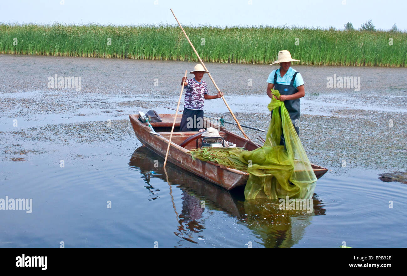 Fishing for freshwater fish in the pond. - Stock Image