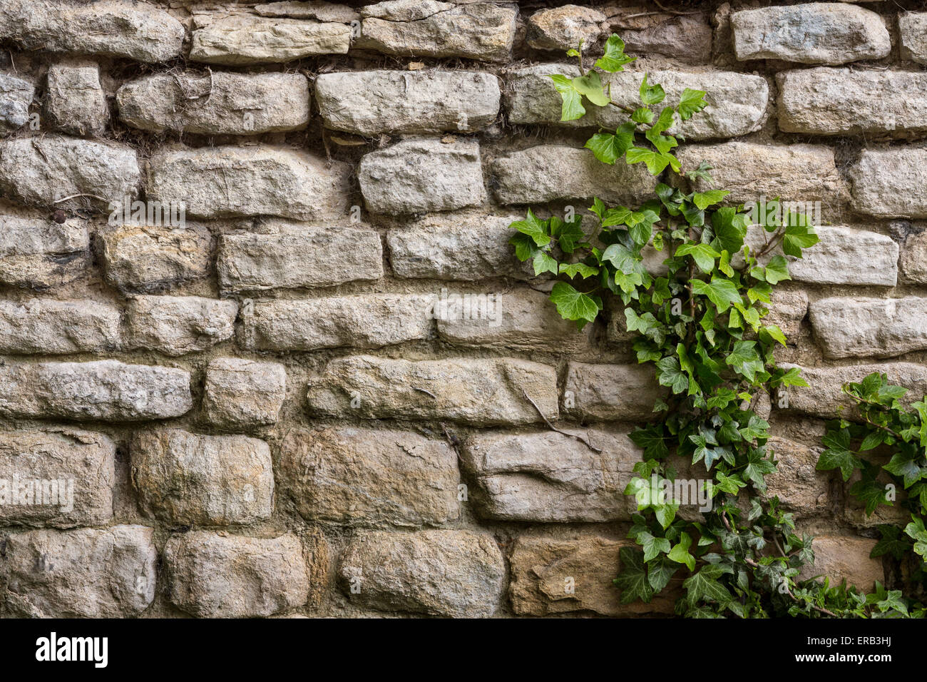 Backgrounds - An ancient stone wall with ivy growing up it. - Stock Image