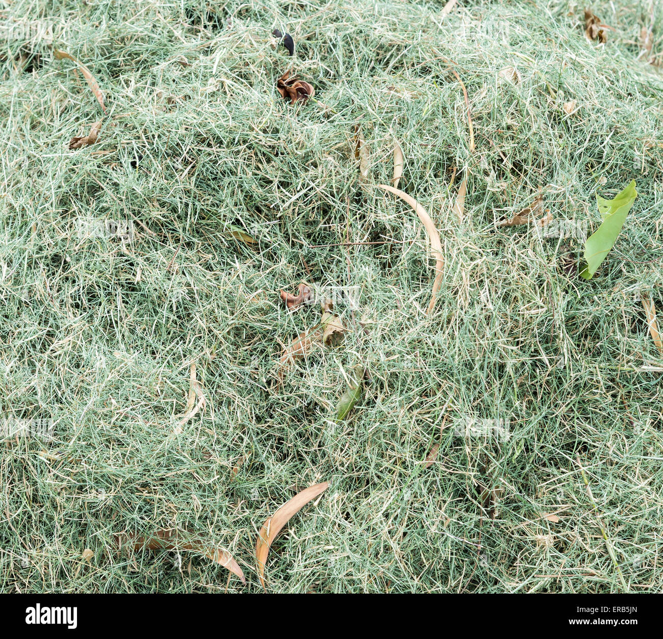 Grass clippings from the meadow of urban park. - Stock Image