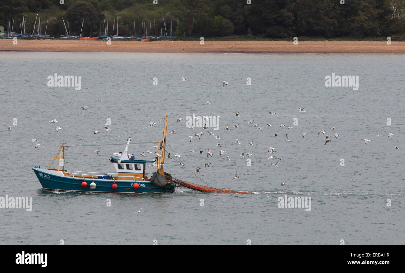 Fishing boat in Southampton water returning to the docks followed by seagulls Stock Photo