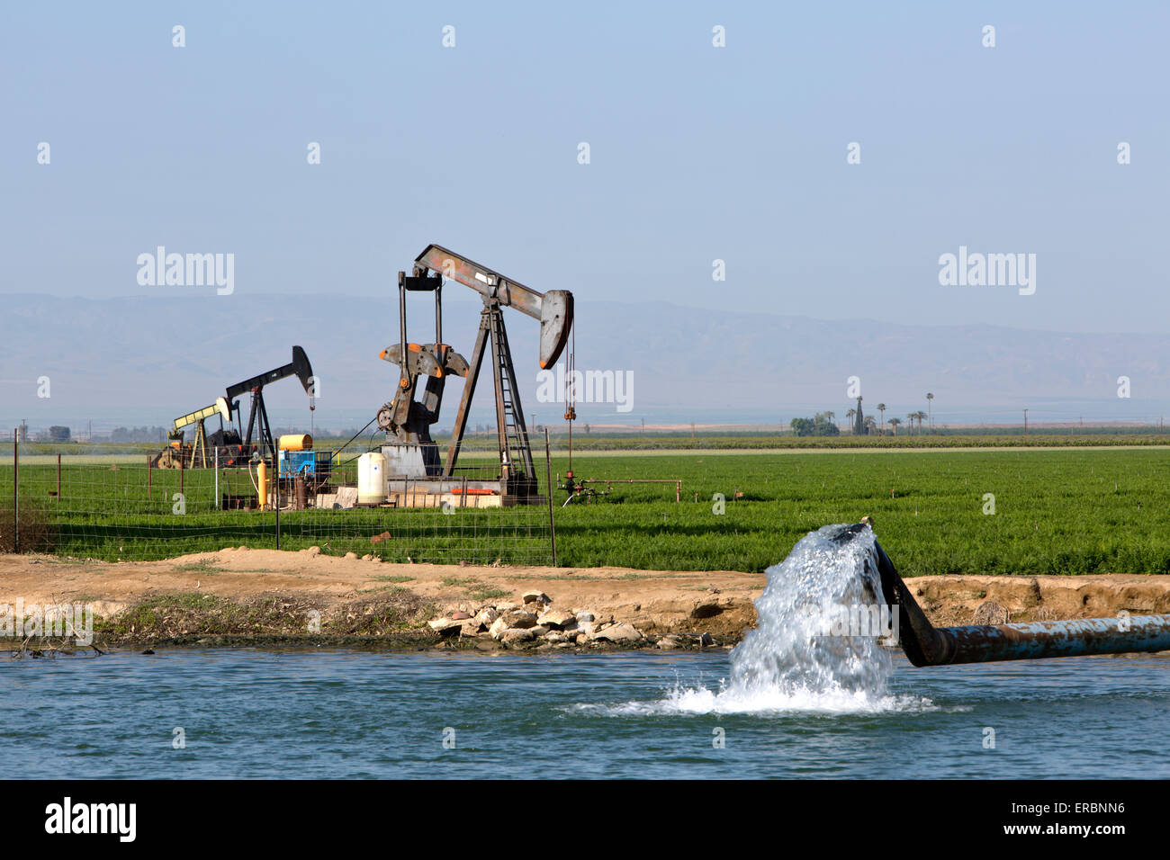 Donkey pumps operating in carrot field, irrigation pond. - Stock Image