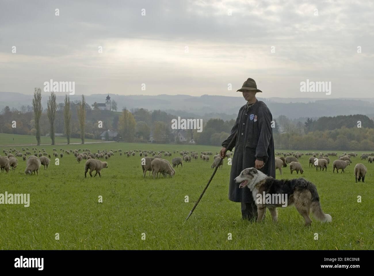 herd of sheeps - Stock Image