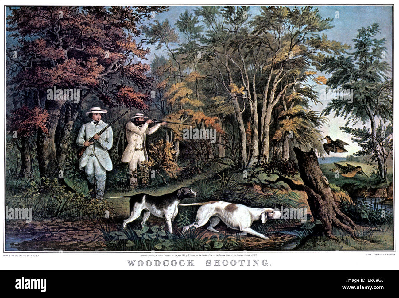 1850s WOODCOCK SHOOTING - CURRIER & IVES LITHOGRAPH - 1852 - Stock Image