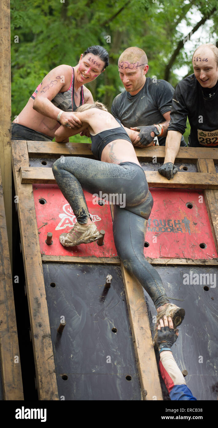 Fun at the Midlands Tough Mudder event , Boughton House, Kettering, 31 may 2015. - Stock Image