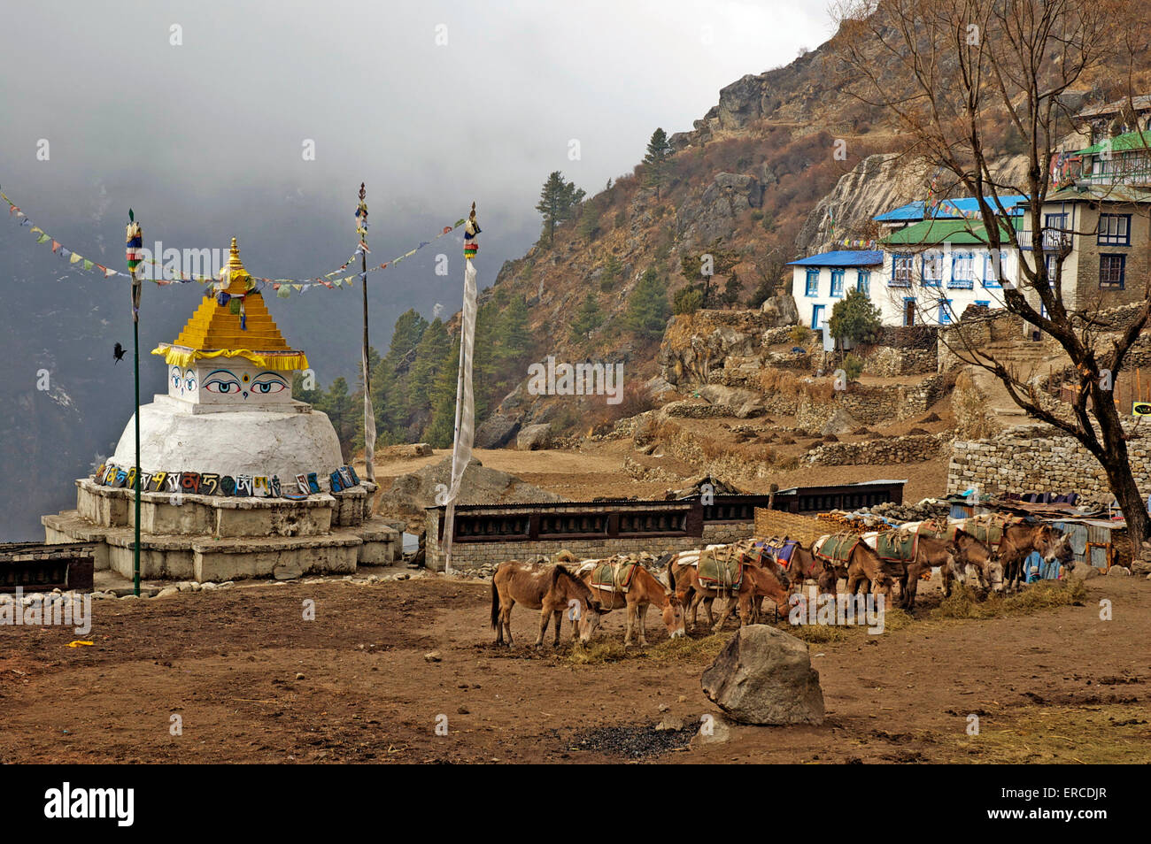 Pack mules feeding in front of the chorten, Namche Bazaar, Nepal. - Stock Image