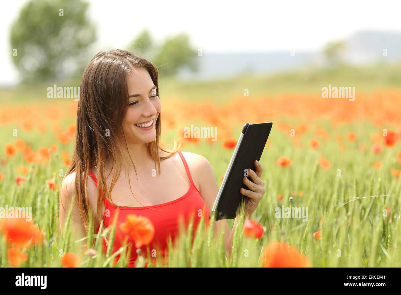 Woman reading an ebook or tablet in the middle of a field with red poppy flowers in summer - Stock Image