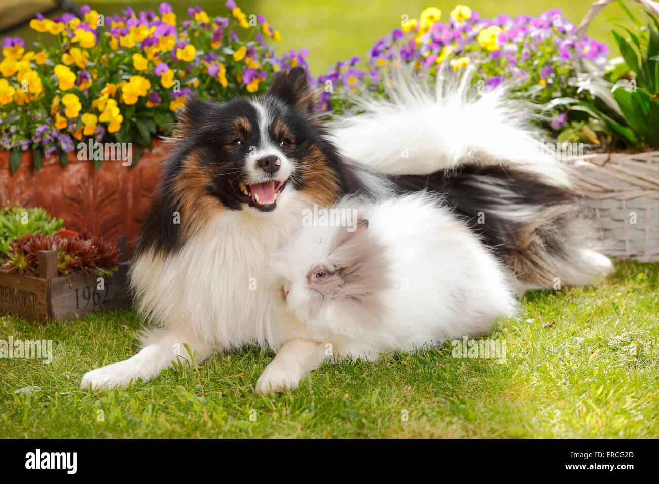 Mixed Breed Dog and Teddy dwarfrabbit|Mischlingshund und Teddyzwergkaninchen - Stock Image