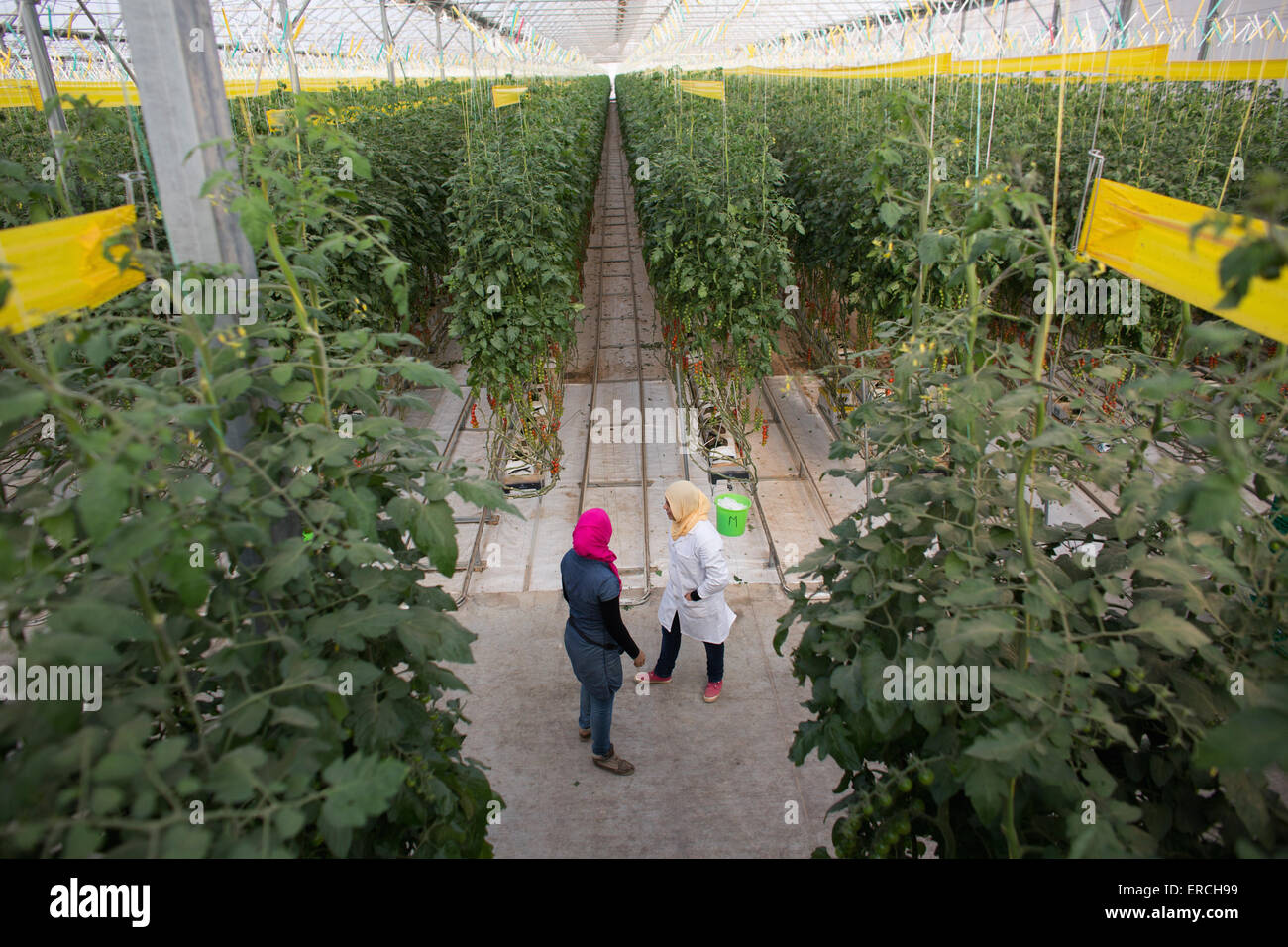 Dutch greenhouses 'Desert Joy' in the desert near Gabes, Tunisia. - Stock Image