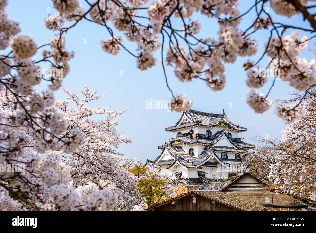 Hikone, Japan at the Castle in Spring. - Stock Image