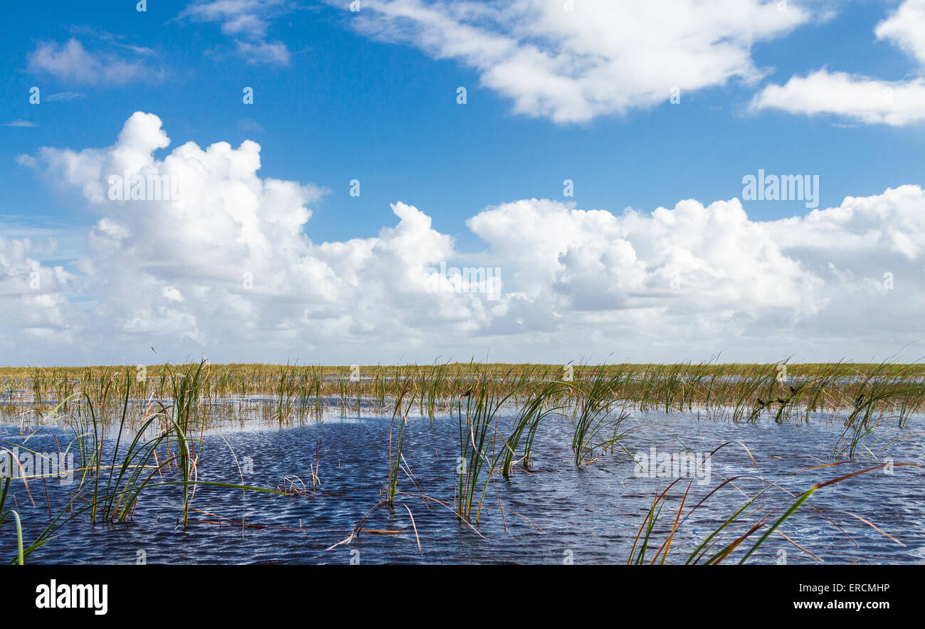The Everglades National Park, Florida - Stock Image