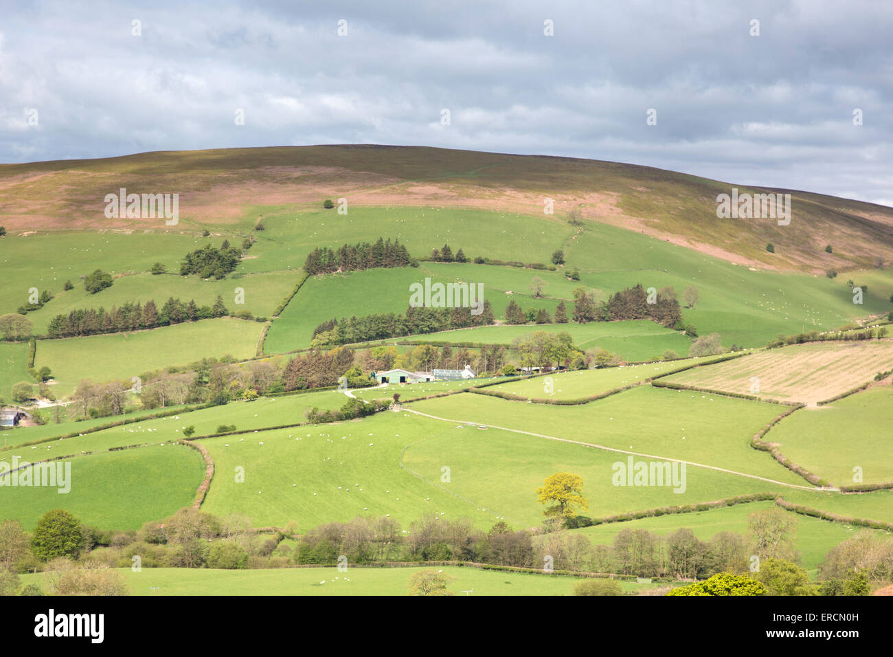 Welsh border country near Builth Wells, Powys, Mid Wales, UK - Stock Image