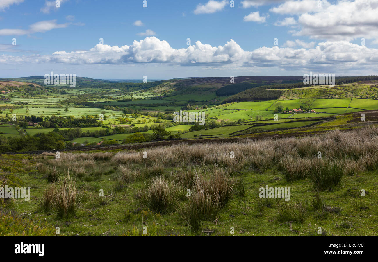 North York Moors National Park showing Glaisdale dale with fields, farmland, trees, cotton grass under a bright Stock Photo