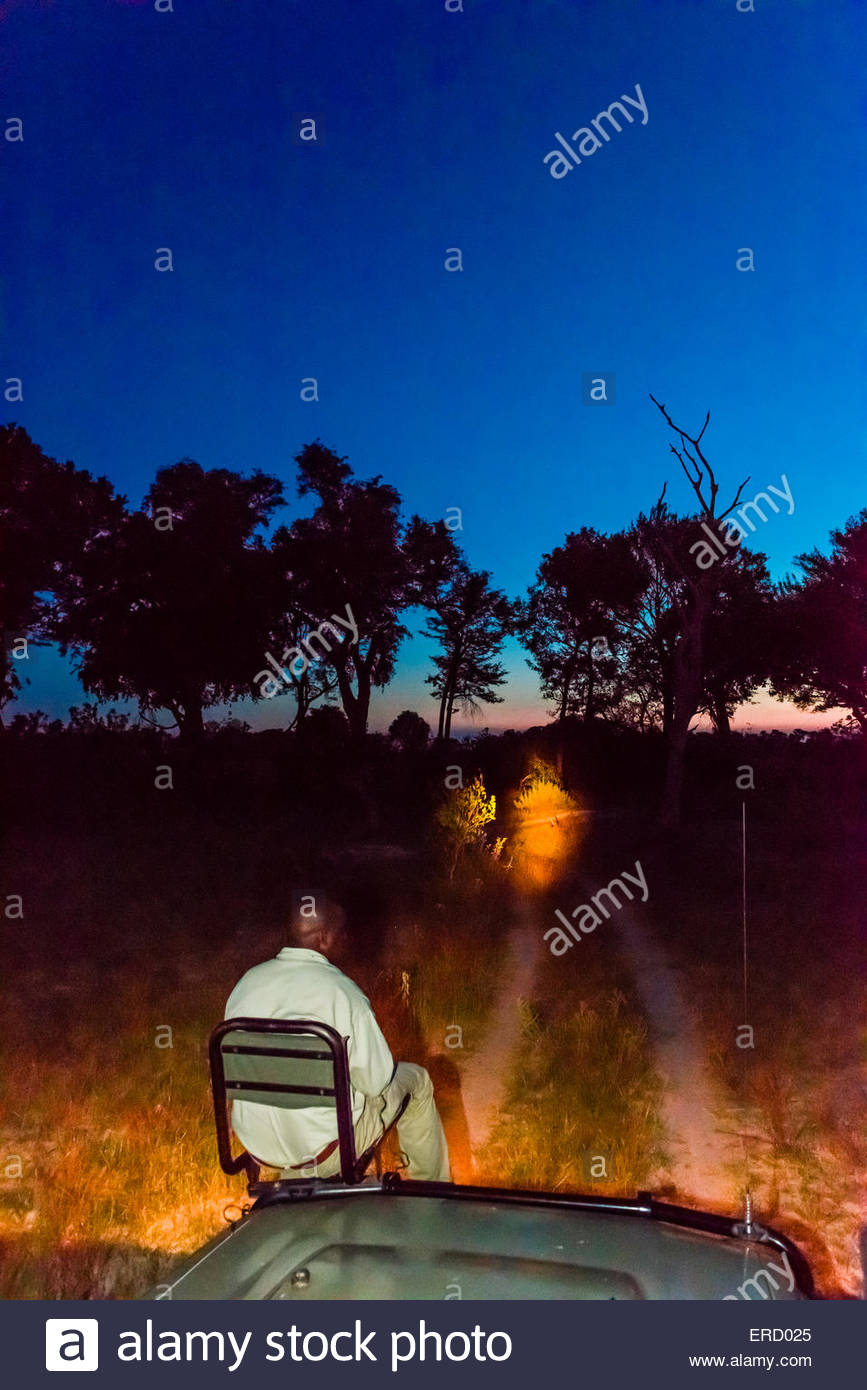 A tracker sits in a seat on the front of a safari vehicle and holds a spotlight looking for nocturnal animals on Stock Photo