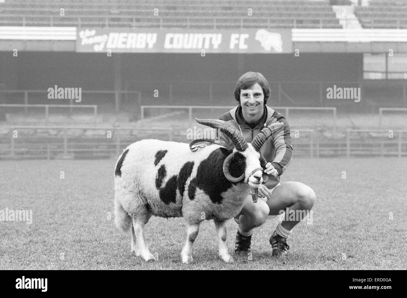 Derby County manager Colin Addison gets to grips with the clubs mascot Proudman at the Baseball Ground.  6th December - Stock Image
